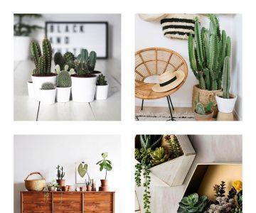 Cactos e suculentas na decoração: ideias e dicas