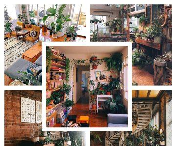Urban Jungle: Descubra como as plantas podem transformar qualquer ambiente