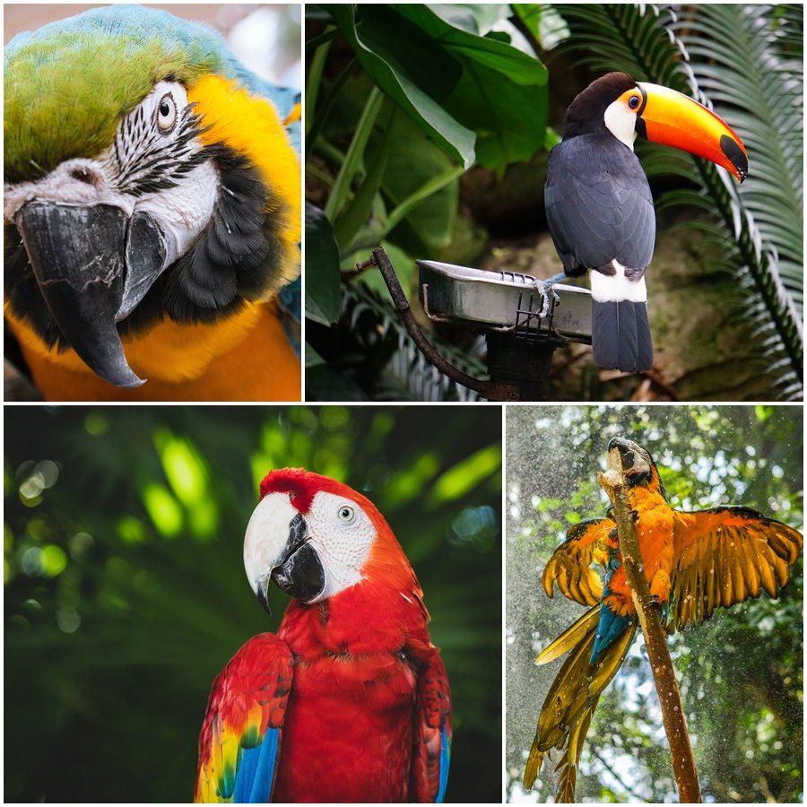 Greenpeace e o #todospelamazônia. Saiba como você pode ajudar