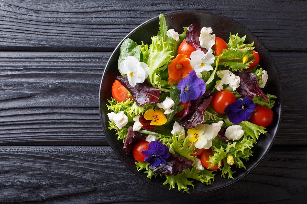 Já ouviu falar em PANCS - Plantas Alimentícias Não Convencionais?